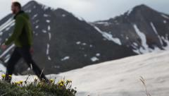 Flowers in a snowfield with hiker in background Stock Footage