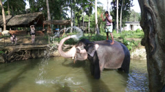 Elephant in  stream with its Mahout on its back. Stock Footage