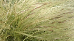 4k close up grassy corn plant structure in the wind Stock Footage