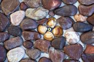 Stock Photo of Stones and seashells on the wall
