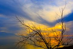 leafless tree on sunset background - stock photo