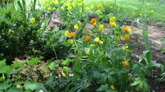 Rain water drops fall on yellow orange flowers in garden Stock Footage