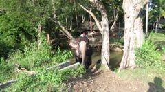 Elephant exiting  stream with its Mahout on its back. Stock Footage