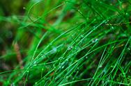 Stock Photo of Droplets of dew on the grass