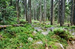 Dense green forest - stock photo