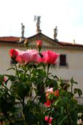 roses in the garden of a historical venetian villa in vicenza - stock photo
