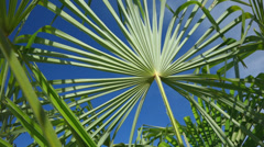 Close up of palm leaves are moving in the wind Stock Footage