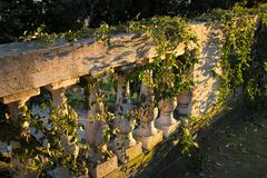 a classic, italian marble banister, with bushes of ivy in the sunset sunlight - stock photo
