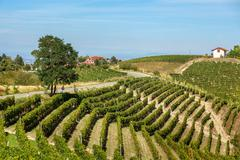green vineyards on the hills of piedmont, italy. - stock photo