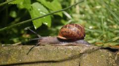 Snail Journey Hi Speed 2fps ECU HD 2 Stock Footage