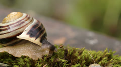 The head of the snail and the shell fs700 odyssey 7q Stock Footage