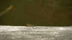 A flying dragonfly fs700 odyssey 7q Stock Footage