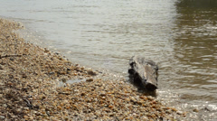 Water level with wood and small waves 1080p - stock footage