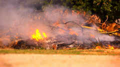 Dry twigs and leaves burn in the campfire. Video Stock Footage