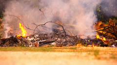 Dry twigs and leaves burn in the campfire. Video shift motion Stock Footage