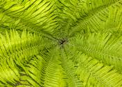 Stock Photo of pattern of fern leaves and stalks
