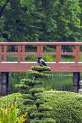 Crow in japanese garden Stock Photos