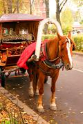 bay horse harnessed to a cart on the road - stock photo