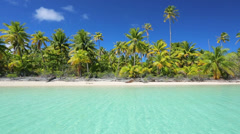 tropical island in the south pacific with palm trees - stock footage