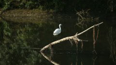 Trunk in the river with white heron in natural environment Stock Footage