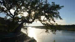 Sun Behind Tree, Pace Bend Park, Lake Travis Austin 6642 Stock Footage