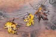 Stock Photo of natural background - autumn maple leaves on old wet wooden background