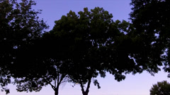 Leafy Treetops Swaying In Breeze At Dusk - stock footage