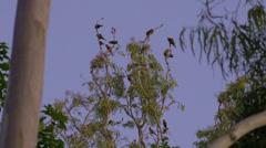 Wild birds at dusk Stock Footage