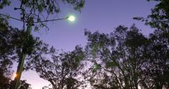 Wild birds at dusk - 4K (UltraHD) Stock Footage