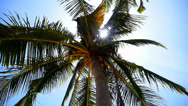 Stock Video Footage of Green Coconut Palm on the Sunny Beach of the Exotic and Tropical Island.