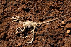 Dinosaur skeleton Kuvituskuvat