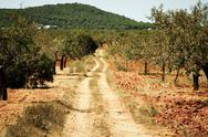 Stock Photo of ibiza island landscape with agriculture fields on red clay soil