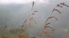 View of a spider web on a grass stem flowing in the wind Stock Footage