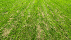 Footstep Walk on the Green Field - stock footage
