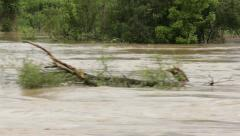 Broken tree floating in turbulent river flow,passing through the shot. Stock Footage