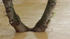 Flooded trees in turbulent river flow,tilt up to iron bridge. Stock Footage