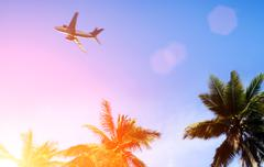 palm and airplane - stock photo