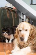 golden retriever and persian cat books - stock photo
