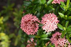 Beautiful light pink flower Stock Photos