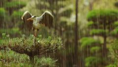 Grey Heron on top of a tree during a rainstorm Stock Footage