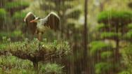 Stock Video Footage of Grey Heron on top of a tree during a rainstorm