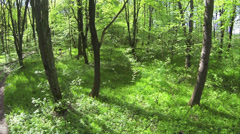 Slow  Flight in spring bright  wood. Aerial Stock Footage
