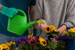 Watering colorful flowers Kuvituskuvat