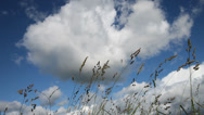 Stock Video Footage of Grass in the wind against sky.