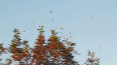 Bird Migration Stock Footage
