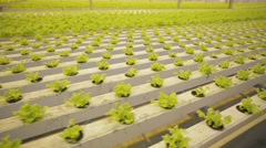 Lettuce in greenhouse hydroponics 3 - stock footage