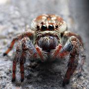 Closeup of a spider Stock Photos