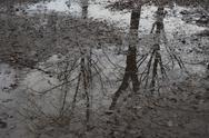 Stock Photo of Puddle with reflections of bare trees in autumn