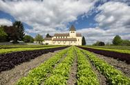 Stock Photo of Germany, Baden-Wuerttemberg, Constance district, Reichenau, Lettuce field in