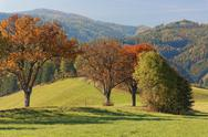 Stock Photo of Austria, Styria, Hartberg, Deciduous trees in autumn